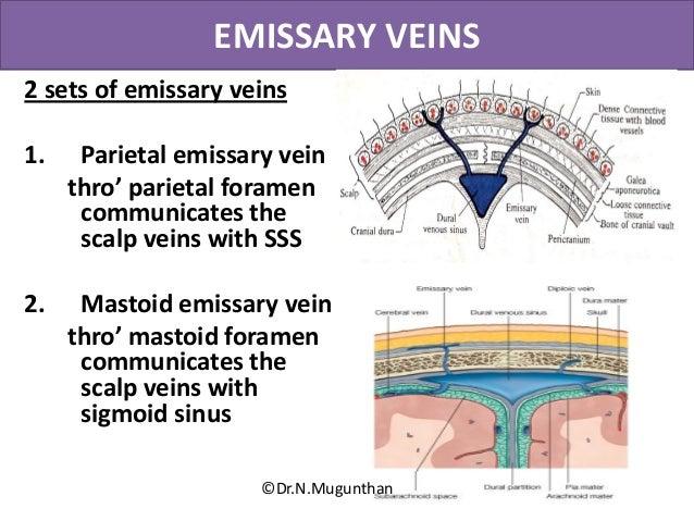 Diagram Of Scalp Veins - DIY Enthusiasts Wiring Diagrams •