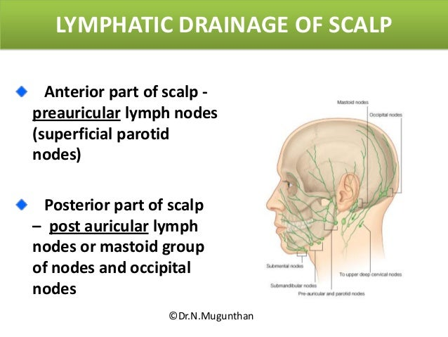 Scalp lymph nodes diagram introduction to electrical wiring diagrams scalp rh slideshare net lymph node grading lymph node grading ccuart Images