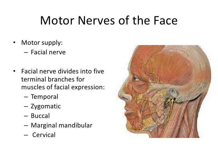 Anatomy Scalp Face