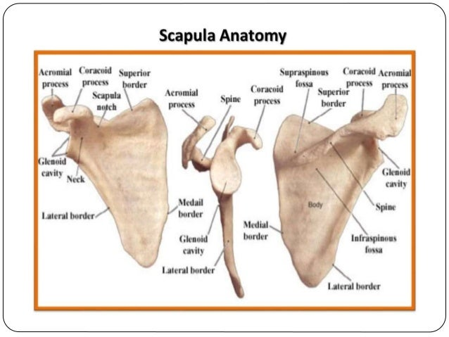scapula fracture diagnosis and management