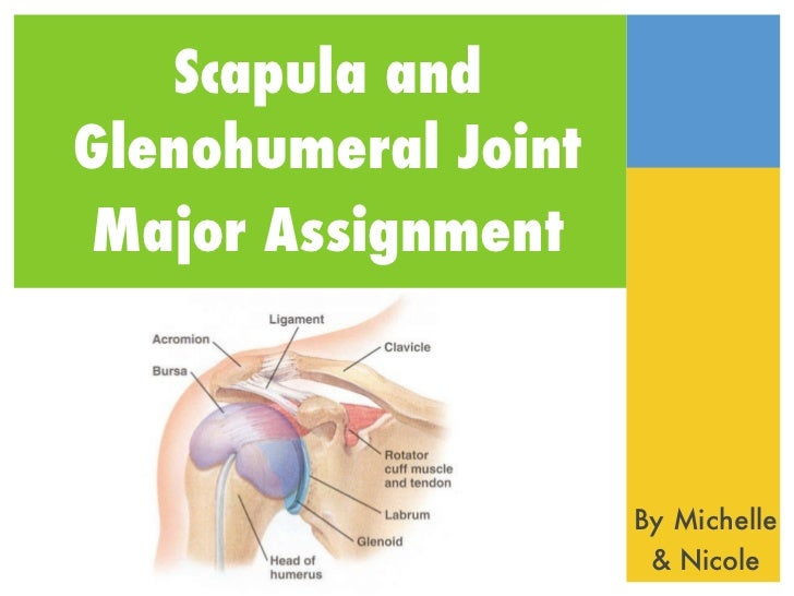 Scapula andGlenohumeral JointMajor Assignment                     By Michelle                      & Nicole