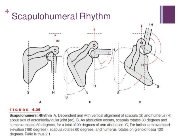 Scapular Dyskinesia And Its Relationship To Rotator Cuff