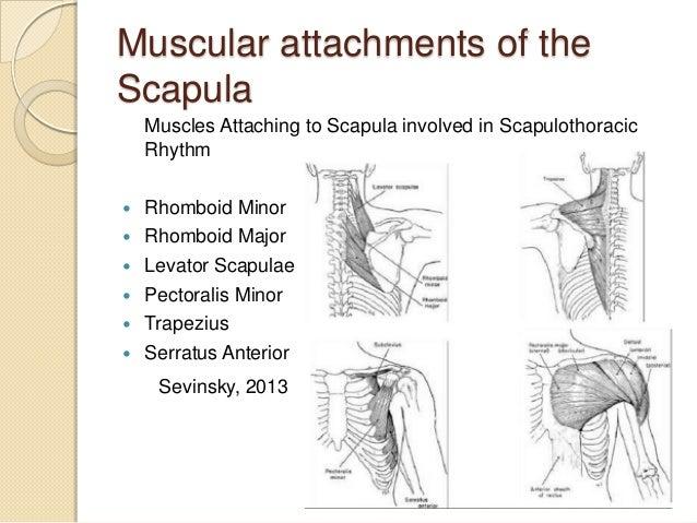 Scapular dyskinesis