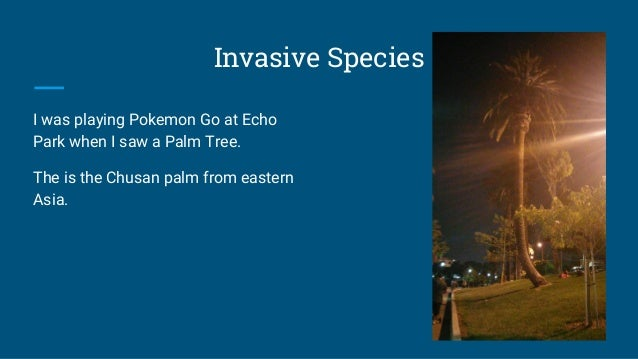 Invasive Species I was playing Pokemon Go at Echo Park when I saw a Palm Tree. The is the Chusan palm from eastern Asia.