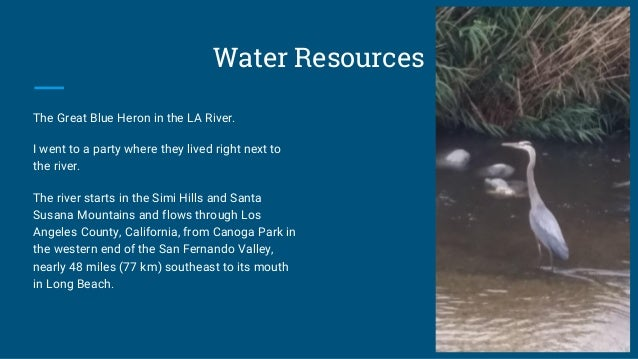 Water Resources The Great Blue Heron in the LA River. I went to a party where they lived right next to the river. The rive...