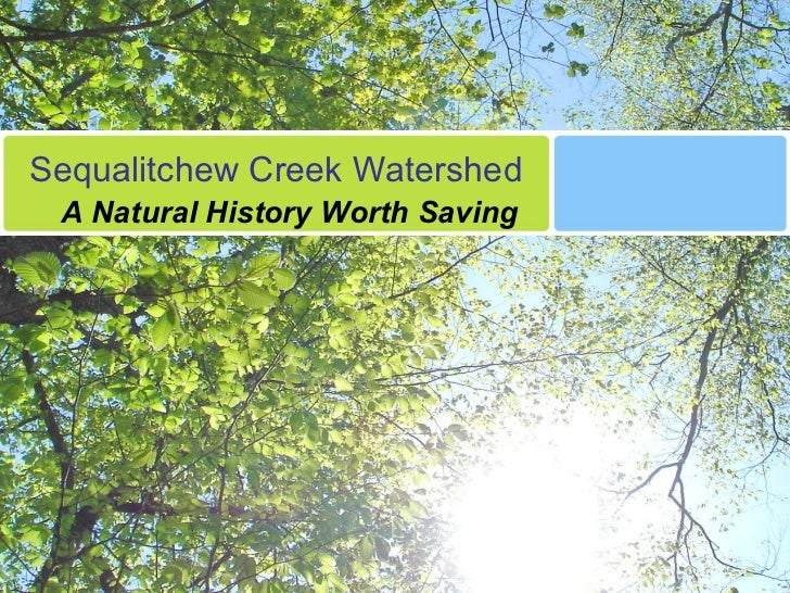 Sequalitchew Creek Watershed A Natural History Worth Saving