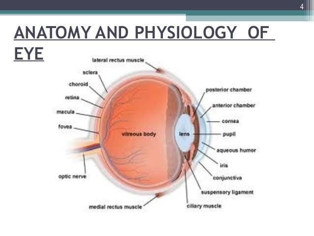 Cul de sac eye anatomy
