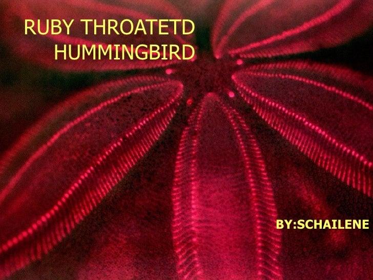 RUBY THROATETD  HUMMINGBIRD                 BY:SCHAILENE