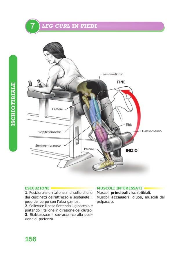 Bodybuilding:BodyBuildingAnatomy  7  29/04/2008  12.23  Pagina 156  LEG CURL IN PIEDI  Semitendinoso  ISCHIOTIBIALE  FINE ...