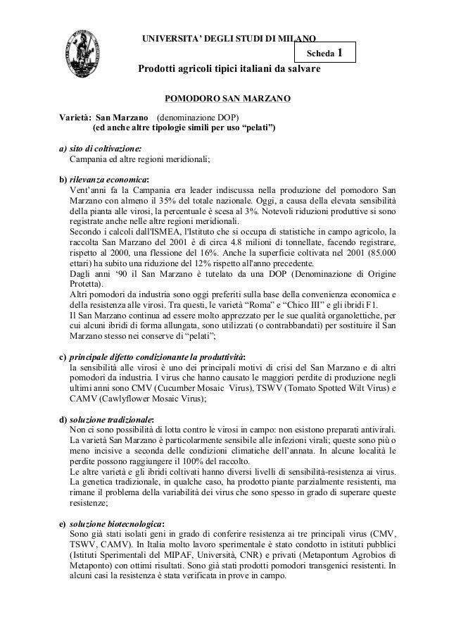 UNIVERSITA' DEGLI STUDI DI MILANO Prodotti agricoli tipici italiani da salvare POMODORO SAN MARZANO Varietà: San Marzano (...