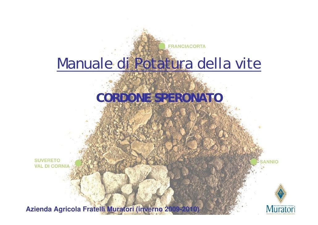 Manuale di Potatura della vite                       CORDONE SPERONATO     Azienda Agricola Fratelli Muratori (inverno 200...