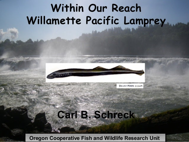 Within Our ReachWillamette Pacific Lamprey          Carl B. SchreckOregon Cooperative Fish and Wildlife Research UnitOrego...