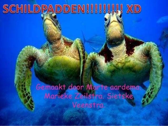 Schildpadden Voorbeeld Van Foute Powerpoint