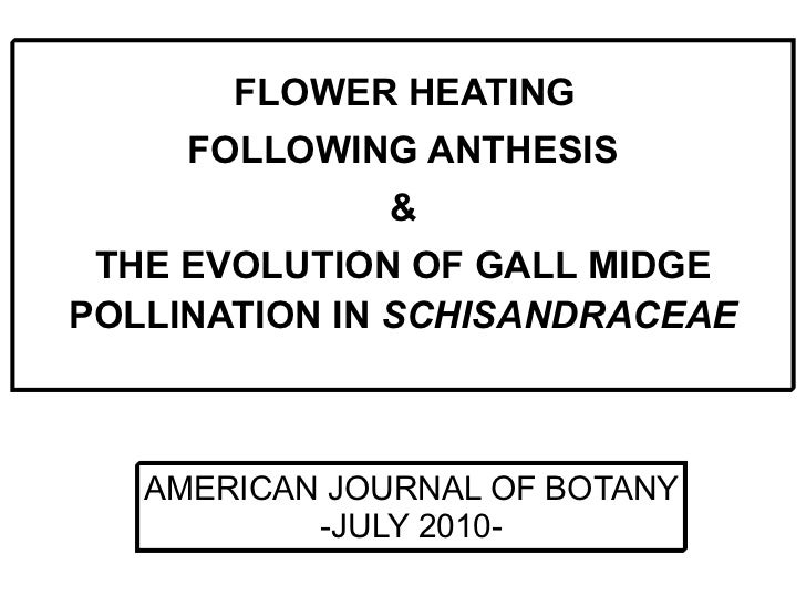 FLOWER HEATING     FOLLOWING ANTHESIS              & THE EVOLUTION OF GALL MIDGEPOLLINATION IN SCHISANDRACEAE   AMERICAN J...