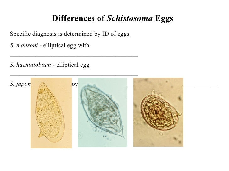 Schistosomes