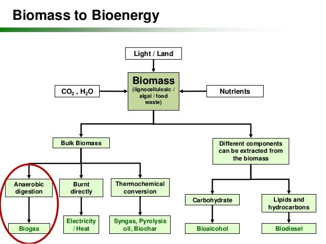 bioenergy from plants and the sustainable Abundant, renewable bioenergy can contribute to a more secure, sustainable, and economically-sound future by providing domestic clean energy sources, reducing us dependence on foreign oil.