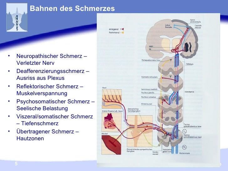 Bahnen des Schmerzes <ul><li>Neuropathischer Schmerz – Verletzter Nerv </li></ul><ul><li>Deafferenzierungsschmerz – Ausris...