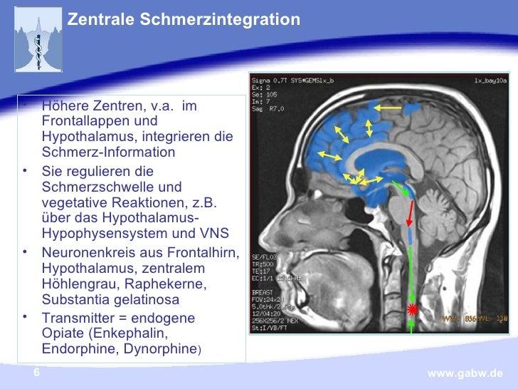 Zentrale Schmerzintegration <ul><li>Höhere Zentren, v.a.  im Frontallappen und Hypothalamus, integrieren die Schmerz-Infor...