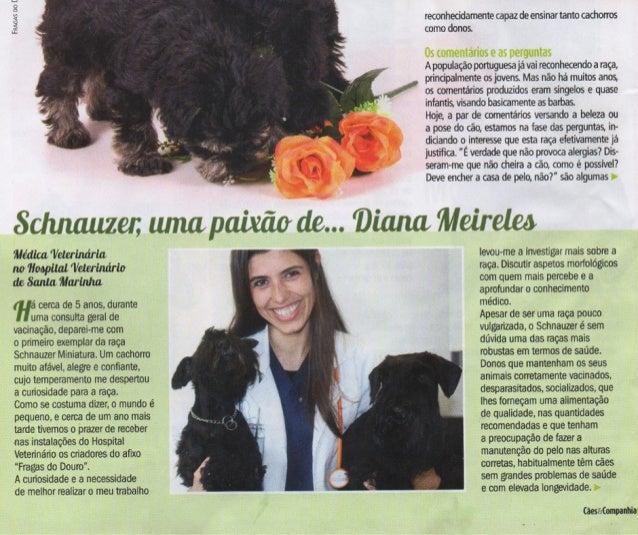 Schnauzer, uma paixão de Drª Diana Meireles