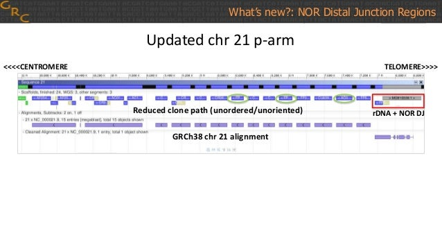 What's new?: NOR Distal Junction Regions Updated chr 21 p-arm <<<<CENTROMERE TELOMERE>>>> Reduced clone path (unordered/un...