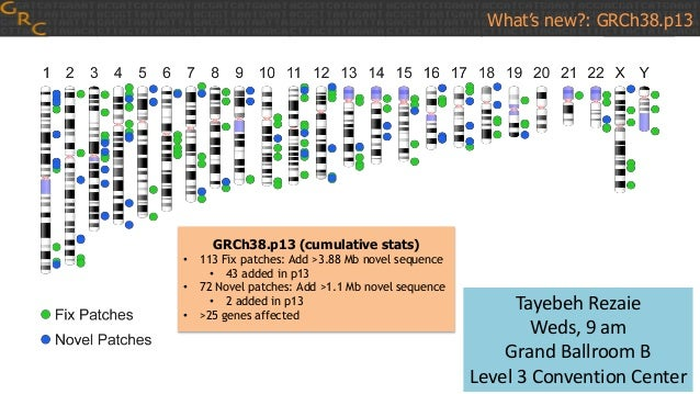 GRCh38.p13 (cumulative stats) • 113 Fix patches: Add >3.88 Mb novel sequence • 43 added in p13 • 72 Novel patches: Add >1....