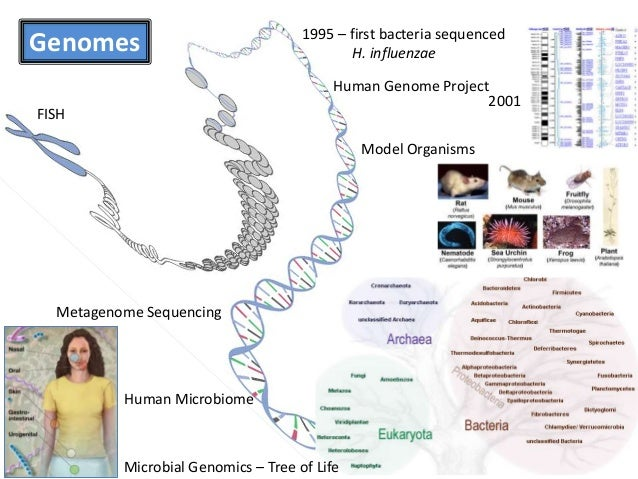 Human Disease Ontology Project presented at ISB's Biocurator meeting April 2014 Slide 3