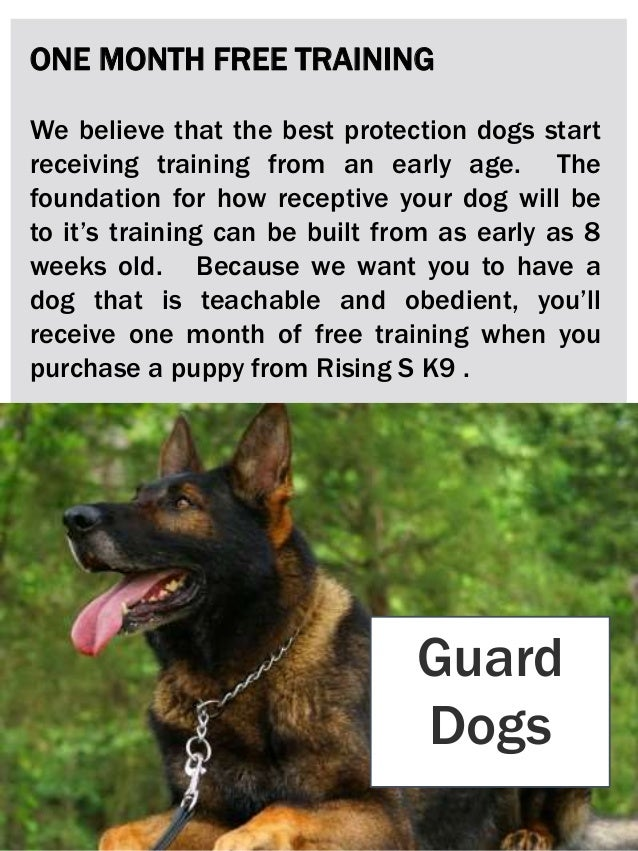 Schutzhund trained dogs for sale