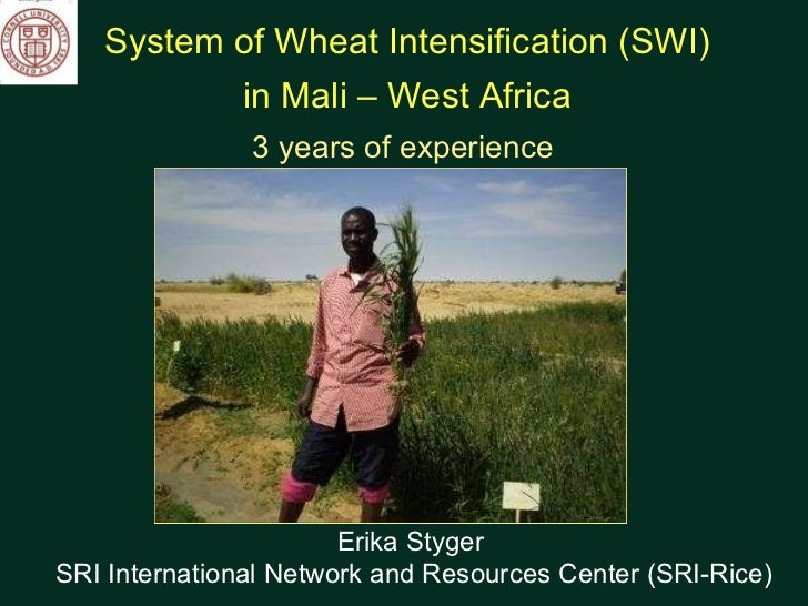 System of Wheat Intensification (SWI)  in Mali – West Africa 3 years of experience  Erika Styger  SRI International Networ...