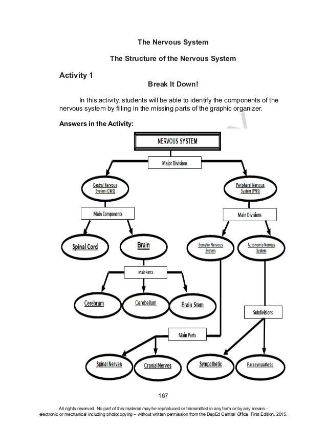 Concept Map Nervous System Answers.Deped Grade 10 Science Teacher S Guide Quarter 3