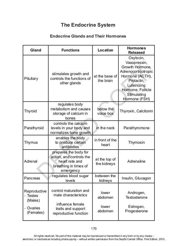 Endocrine system – Review Sheet #2 - Science Teachers
