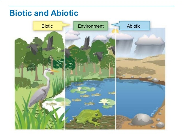 preAP Bio Chapter 3 part 1 – Abiotic and Biotic Factors Worksheet