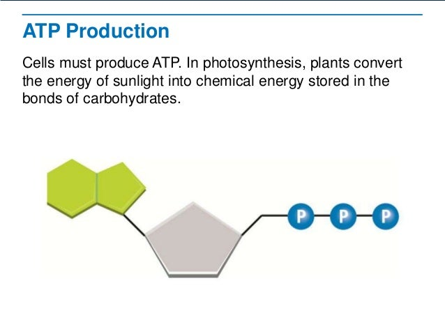 ATP is NRG – Atp Worksheet