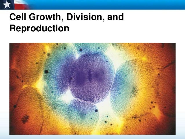 cell growth and division Article recommendations by f1000prime's peer-nominated faculty in cell growth & division - a comprehensive resource that identifies and rates the best articles published in the biomedical sciences.