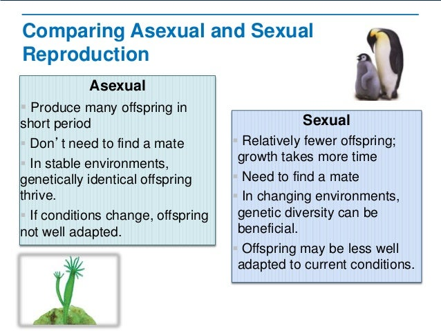 Asexual and sexual reproduction compare