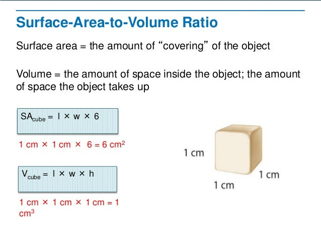 surface area and cell size Variation in size and shape influence surface area : the model below allows you to explore how variation in cell size and shape influence the ability of a.