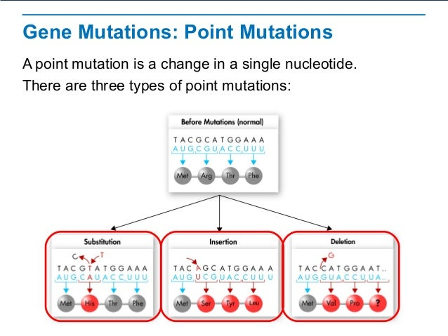 How does mutation affect DNA replication? | Socratic