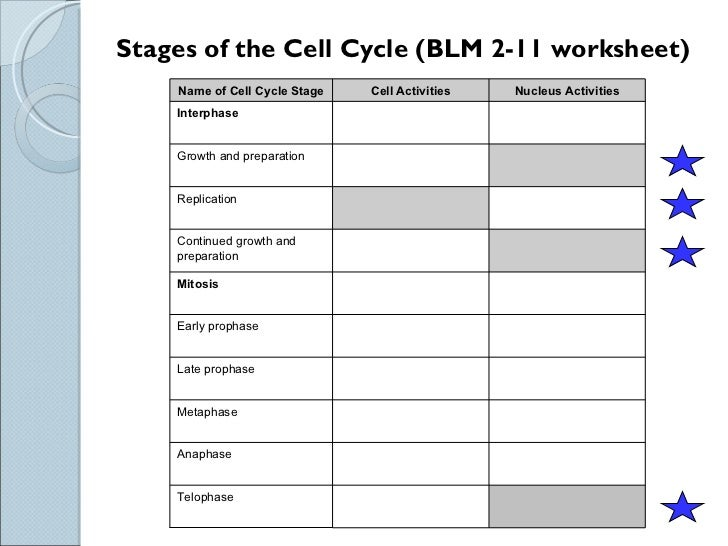 Sci 9 Lesson 2 Feb 23 Ch 51 Mitosis – Mitosis Worksheet and Diagram Identification Answer Key