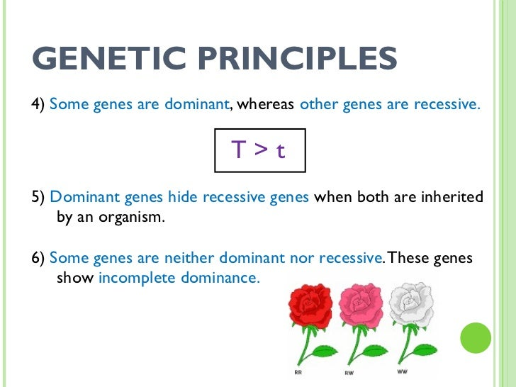 SCI 9 Lesson 2 Mar 17 Introduction to Genetics 2 – Dominant and Recessive Traits Worksheet