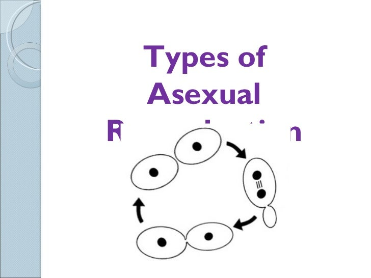 Sci 9 Lesson 4 Mar 2 Ch 52 Asexual Reproduction – Types of Asexual Reproduction Worksheet