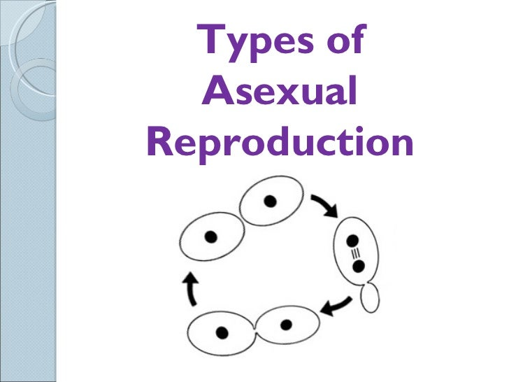 Sci 9 Lesson 4 Mar 1 and 2 Ch 52 Asexual Reproduction – Types of Asexual Reproduction Worksheet