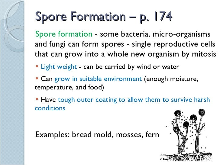 Spore formation asexual reproduction examples in plants