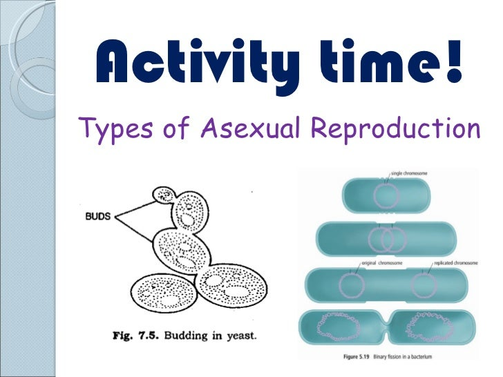 Sci 9 Lesson 4 Mar 1 and 2 Ch 52 Asexual Reproduction – Asexual Reproduction Worksheet