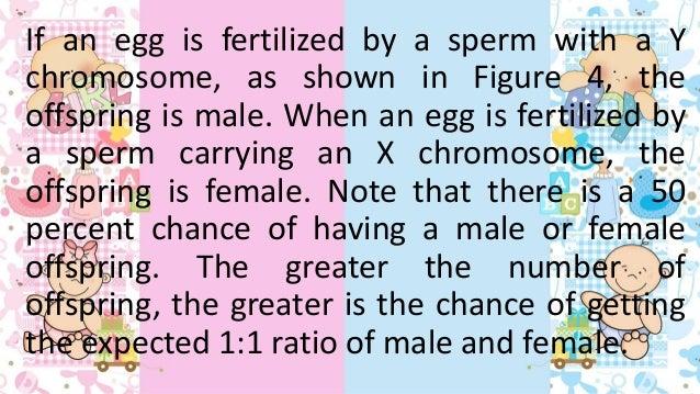 Determining chromosomes in sperm