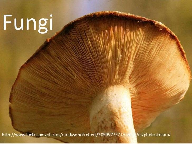 Fungihttp://www.flickr.com/photos/randysonofrobert/2059577371/sizes/l/in/photostream/