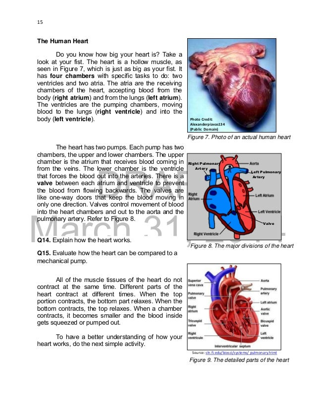 K to 12 grade 9 learners material in science heart 15 ccuart Images