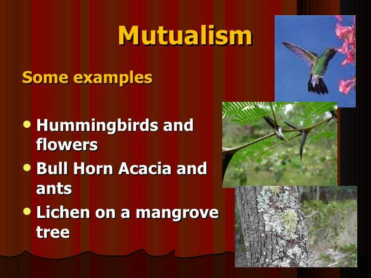 Science 9 Unit A Biological Diversity Section12 Lesson Interdependen