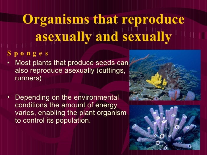 Organisms that reproduce sexually