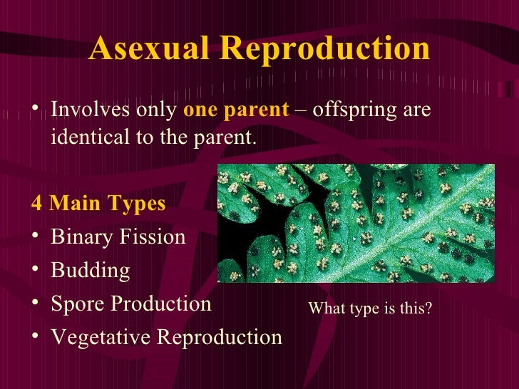 asexual reproduction advantages