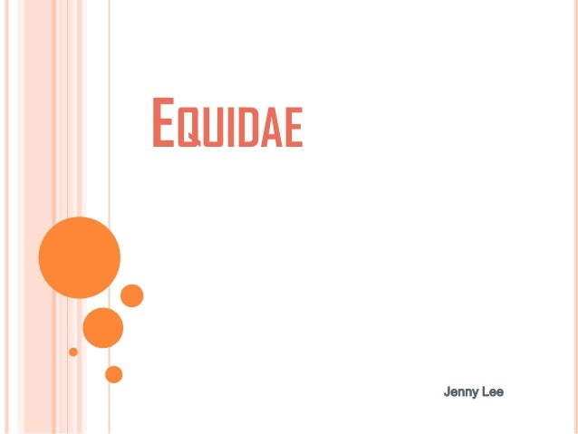EQUIDAE Jenny Lee