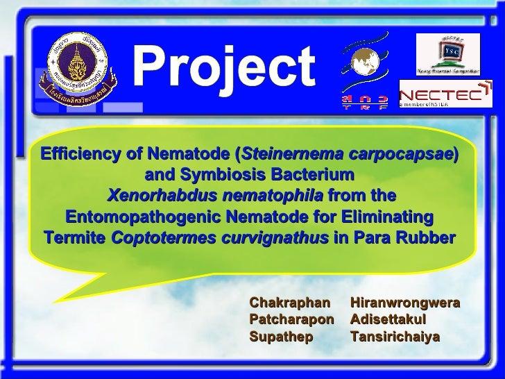 Efficiency of Nematode ( Steinernema carpocapsae )   and Symbiosis Bacterium   Xenorhabdus nematophila  from the Entomopat...